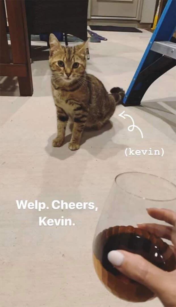 В лице этого уличного котика, американцы Эрин Бриан и Лэндон Боруп, нашли нового друга