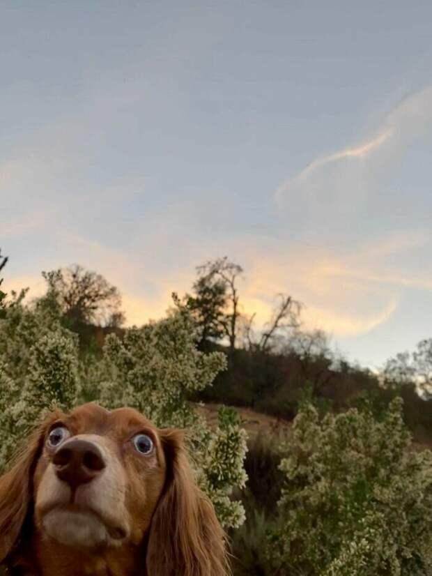 Фото «неисправных» собак, которые улучшат вам настроение