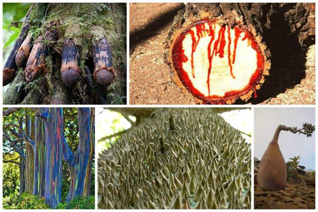 Потрясающие деревья нашей планеты деревья, невероятное, природа, удивительное, флора