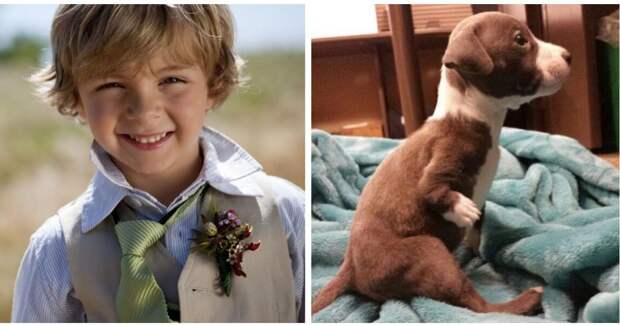 """""""Мне нужен тот, кто меня поймёт…"""" История о мальчике и хромом щенке, который родился не случайно!"""