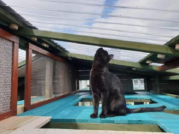 Парню потребовался целый год, чтоб построить гигантский игровой комплекс для своей кошки