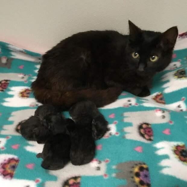 Женщина приютила найденную в лесу кошку и та вскоре преподнесла ей 5 сюрпризов