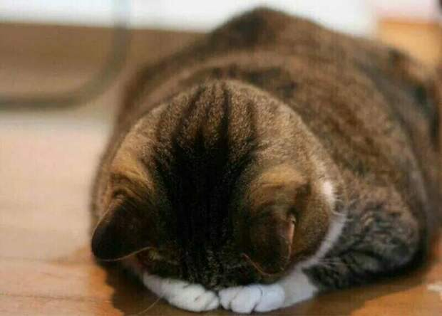 14 смешных фото котов, которые обиделись на своих хозяев