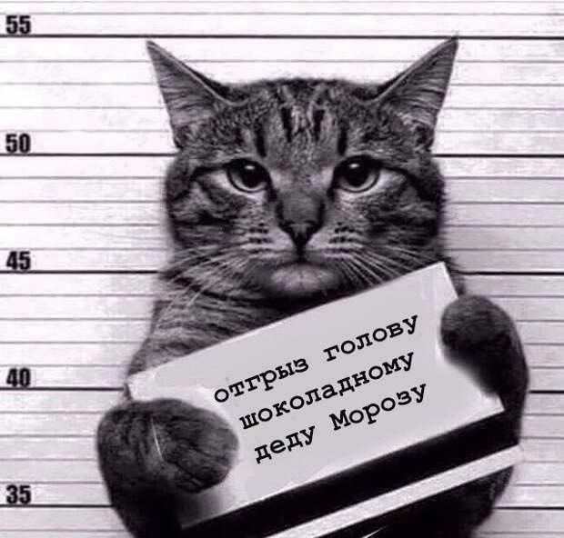 Новогодняя криминальная сводка