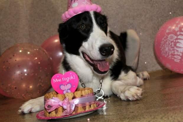 собака в день рождения