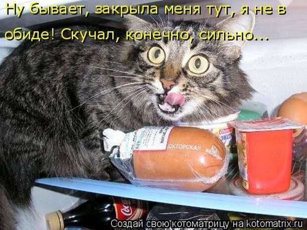 Новая котоматрица для всех (34 фото)