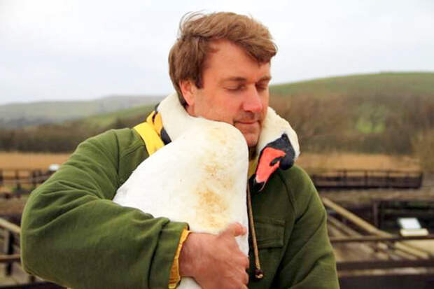 Лебедь обнимает своего спасителя, обвив его шеей Счастливый конец, животные, спасение