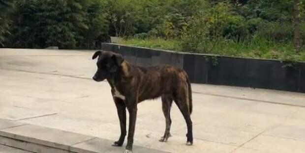 Пса бросили на улице и он 3 года ждет своего хозяина возле многоэтажки