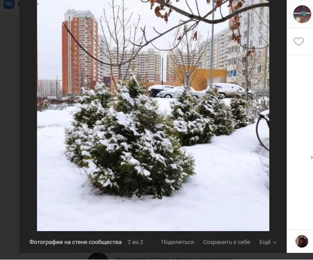 Фото дня: мороз украсил ёлки в Некрасовке