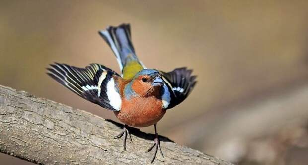 Как птицы могут видеть магнитное поле Земли, и зачем им это нужно
