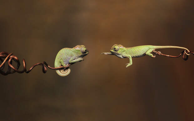 cute-baby-chameleons-582b86c584ca1__700