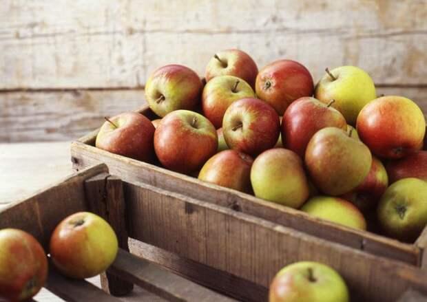 Яблонька от яблочка