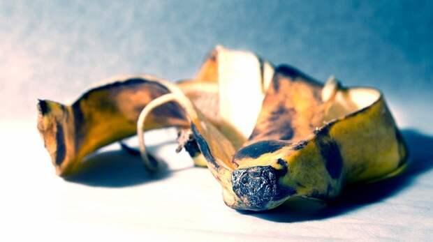 Основное отличие пищевых отравлений отпищевых инфекций