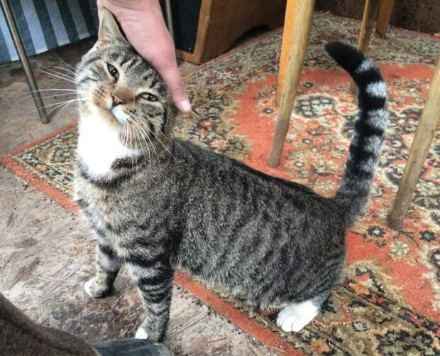 Ласковый котик, брошенный горе-хозяевами, замерзает на улице...