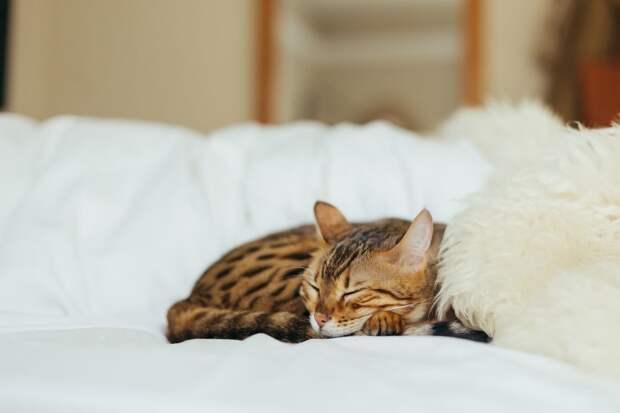 Здоровый сон: заснуть, проснуться, выспаться