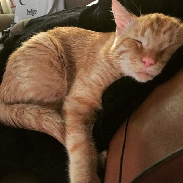«Самый грустный кот» преобразился всего за час после того, как ему нашли новый дом