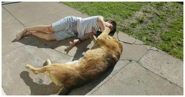 Трогательная встреча мальчика со своим псом спустя 8 месяцев после его пропажи видео, встреча, дети, животные, пропажа, разлука, реакция, собака, хозяин