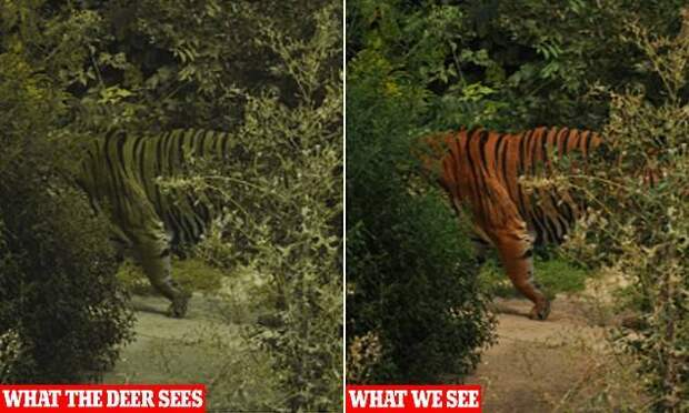 Почему люди не видят и никогда не увидят рептилоидов?