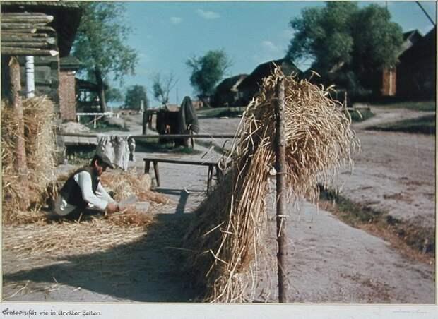 Крестьянин молотит зерно. Калужская область.