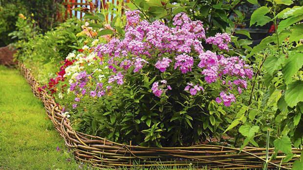 Какие цветы сажать летом на даче: от классики к нестандартным решениям