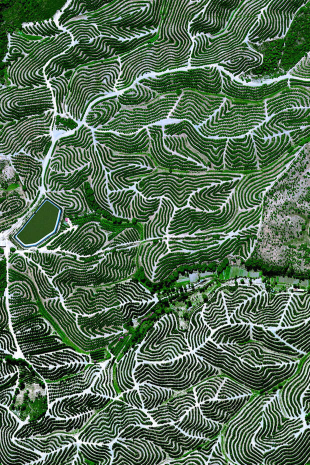 13. Фруктовые сады, Уэльва, Испания фото со спутника, фотограф Бенджамин Грант, фотографии