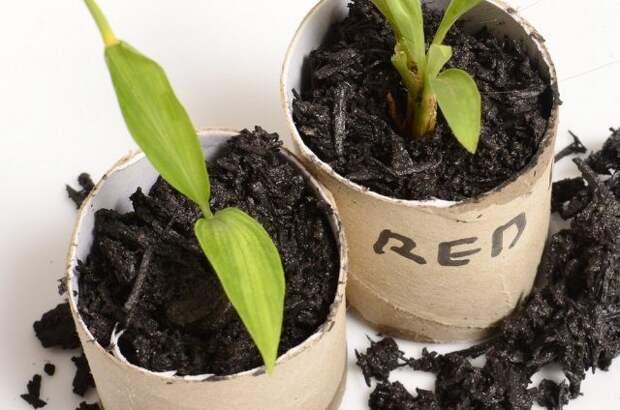 Необычные способы выращивания рассады