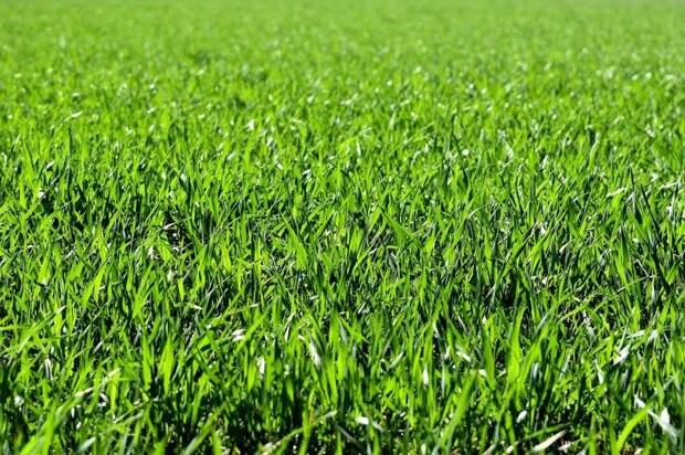 На Дубнинской обновили газон