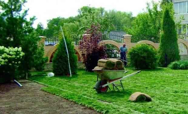 Технология укладки и правила выращивания рулонного газона.