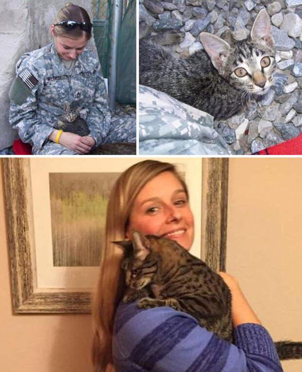 Военнослужащая отказалась оставить больного котенка в Афганистане. Она не испугалась того, что ей пришлось ждать несколько месяцев и заплатить $2000, чтобы перевезти кошку в Штаты  Счастливый конец, животные, спасение