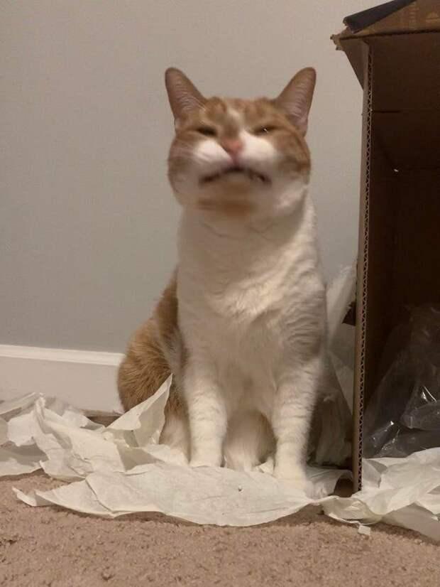 18 неудачных фото котиков, которые те хотели бы удалить, но они были нагло слиты в Интернет
