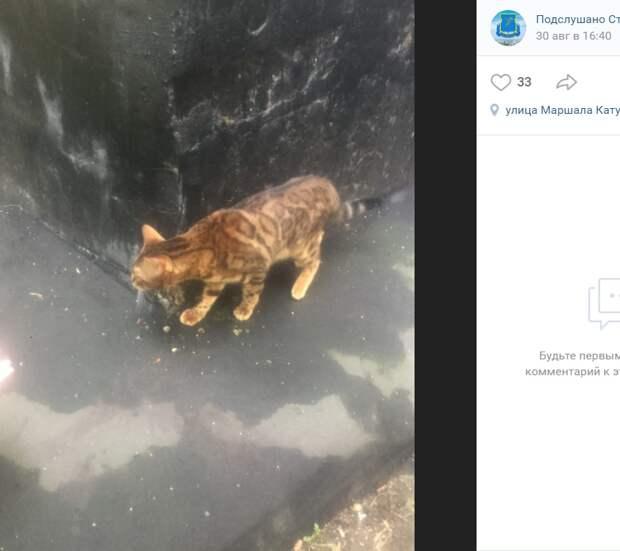 На улице Маршала Катукова спасли бенгальскую кошку после падения с 9-го этажа