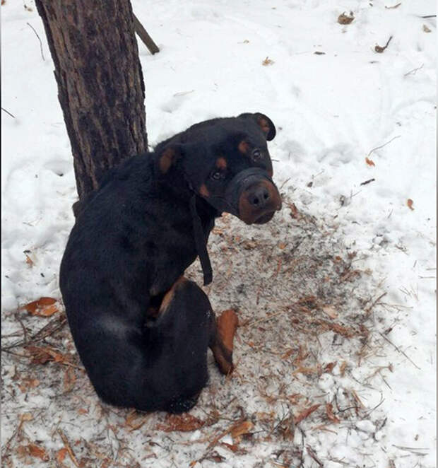 """""""Холодно-голодная смерть"""". Челябинцы спасли пса, привязанного к дереву на морозе"""