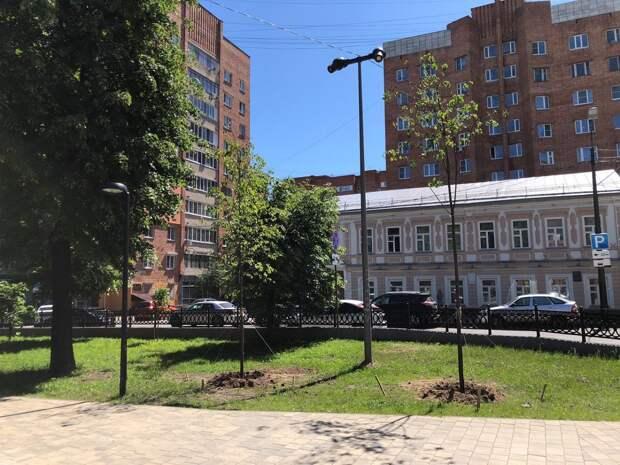 Еще 15 деревьев высадили в сквере на Звездинке