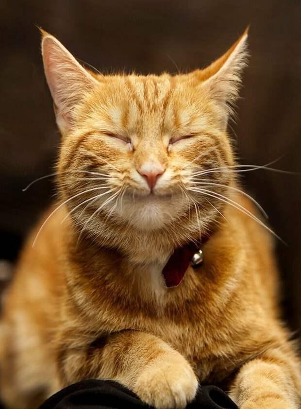 У одной знакомой кот стал игнорировать свой лоток. Причина нашлась довольно быстро