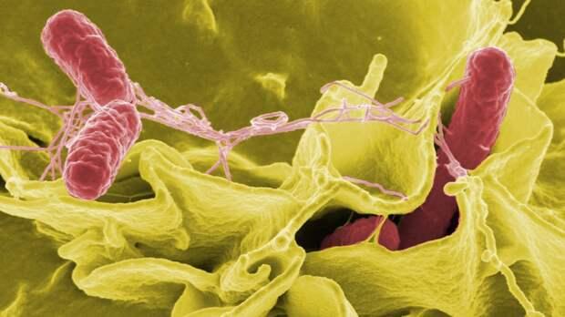 Пандемия COVID-19 снизила количество заражений кишечными инфекциями