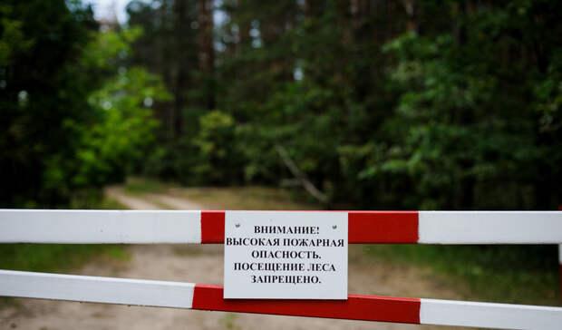Минприроды ввело ограничения на пребывание граждан в лесах Карелии