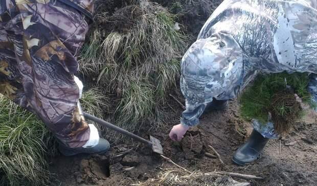 На восстановление леса в Удмуртии выделили 40 млн рублей