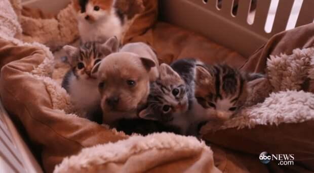 Теперь ты наш брат: кошачья семья приняла осиротевшего щеночка
