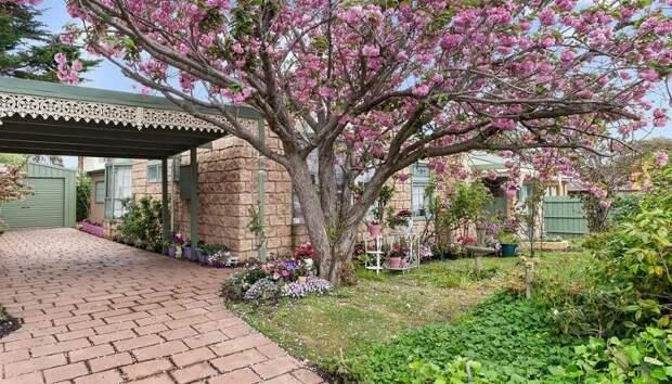 Цветы на дереве тоже розовые! | Фото: realestate.com.au.