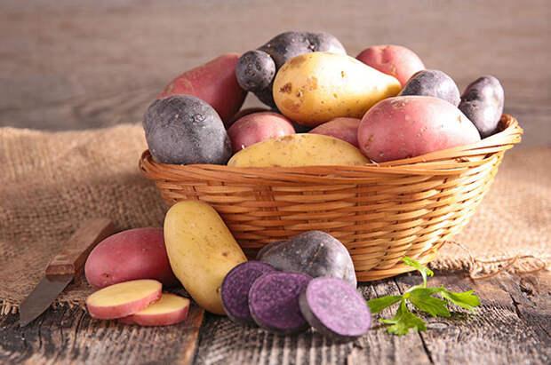 Картофель: как сохранить и приумножить урожай клубнеплода