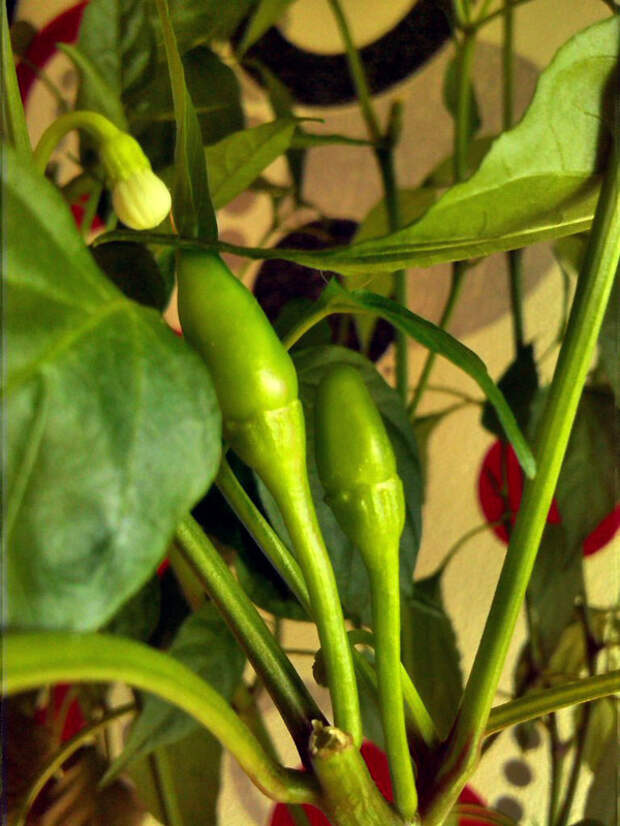 Выращивание растений методом гидропоники гидропоника, прогрессивное растениеводство, гровинг, длиннопост