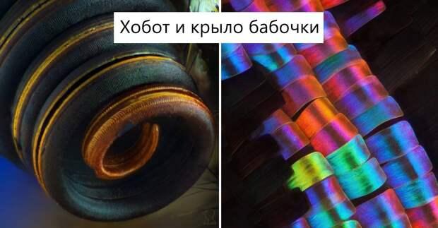 Микроскоп позволяет увидеть мир по-другому: 14 фото