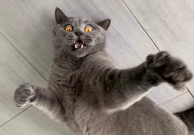По их мордахам все и так понятно: 12 крайне эмоциональных котов