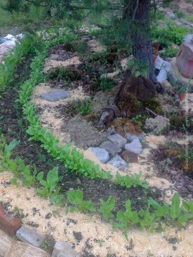 Огород вдоль болот. Рассказ о мечте, вдохновении и разрушении шаблонов