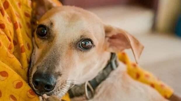 Несколько выстрелов – и собаки затихли навсегда. Лишь один пёс выжил и теперь в страхе прятался