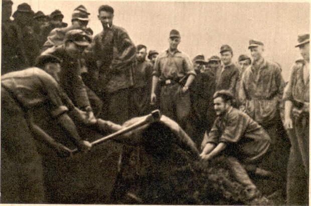 24 Карстягер дивизион дер СС.jpg