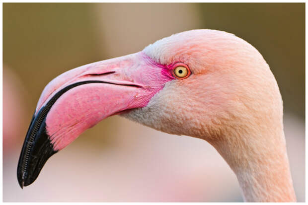 Самые необыкновенные птичьи клювы в мире! Узнавай новое вместе с нами ;)