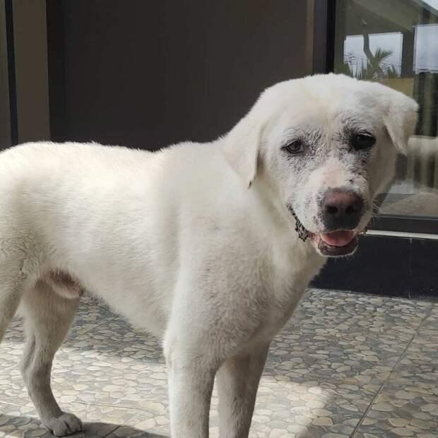 Голодный и забитый пес с заправки за месяц превратился в счастливого красавчика