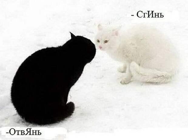 На изображении может находиться: кот, текст «-сгинь -отвянь»