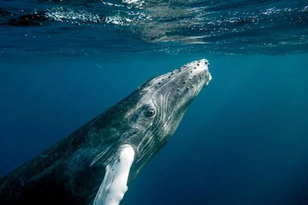 Видео: Влюбленные серые киты плывут и обнимаются